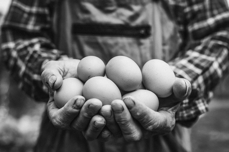 Home - Happy Egg Co